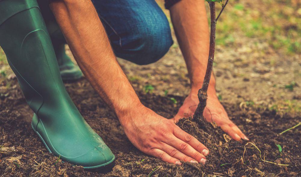 Quels types d'arbres planter dans son jardin durant la saison printanière ?