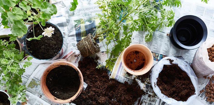 Comment garder la terre humide dans les pots ?